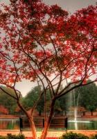 tree, park, bench