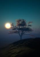 tree, sunset, night