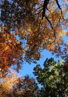 trees, autumn, leaves