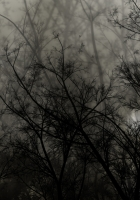 trees, branches, dark