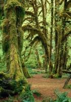 trees, fern, moss