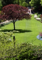 trees, garden, lawn