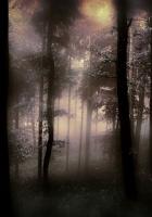 trees, gloomy, degradation