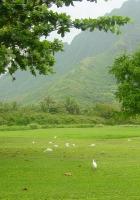 trees, greens, birds