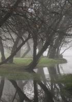 trees, haze, fog