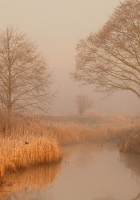 trees, hoarfrost, fog