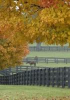 trees, horses, shelter