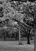 trees, park, black-and-white