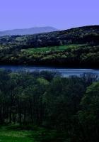 trees, river, coast