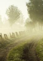 trees, road, fog