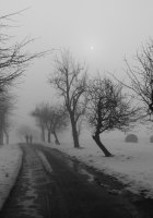 trees, road, winter
