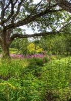 trees, tree nursery, long-term