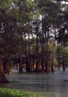 trees, water, ooze
