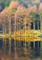 trees, wood, coast