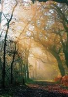 trees, wood, road