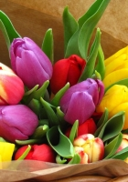 tulips, flowers, bright