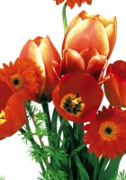 tulips, flowing, gerbera