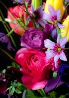 tulips, ranunkulyus, pansy