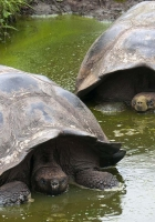 turtles, large, shell