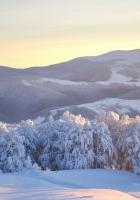 ukraine, carpathians, trees
