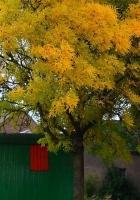 van, tree, leaves