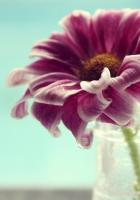 vase, petals, water
