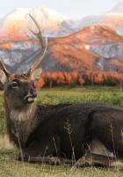 walk, deer, field