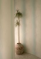 wall, corner, vase