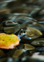 water, leaf, yellow