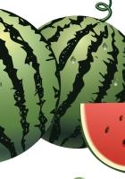watermelon, berries, drawing