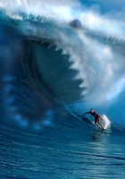 wave, shark, surfing