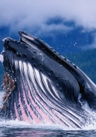 whale, water, waves