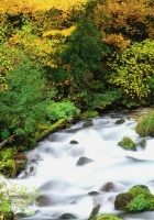 willamette national forest, oregon, wood