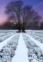 winter, field, ranks