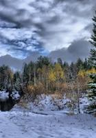winter, snow, fir-trees