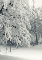 winter, snow, storm