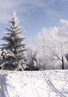 winter, trees, hoarfrost