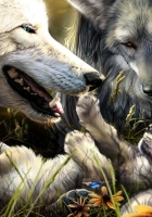 wolves, family, birth
