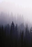 wood, background, coniferous