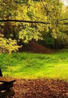 wood, bench, glade
