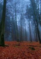 wood, earth, leaves