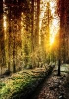 wood, light, sun