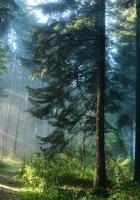 wood, road, light