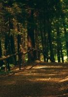 wood, road, track