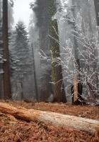 wood, trees, hoarfrost