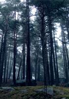 wood, trees, kroner