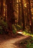 wood, trees, track