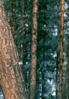 wood, trees, trunk