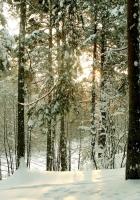 wood, trees, winter