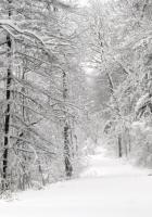wood, winter, snow